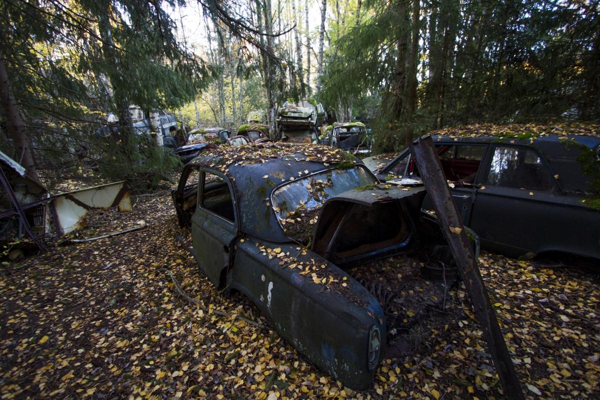 Senas automobilis miške