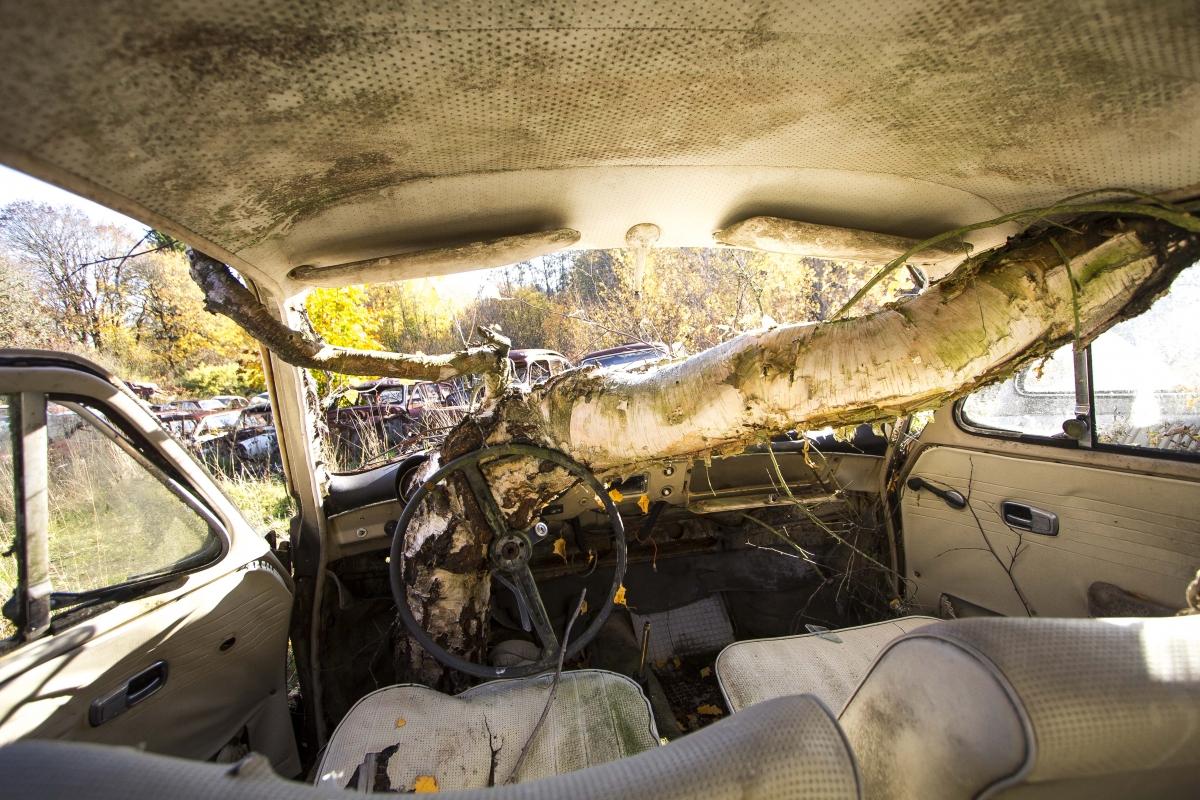 Medis automobilyje