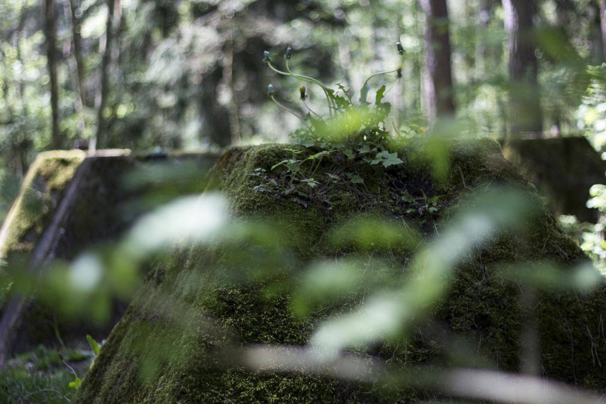 Betoniniai luitai miške