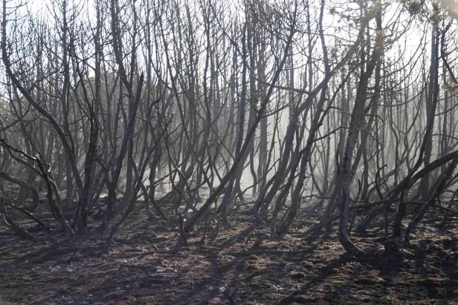 Sudegęs miškas prie kelio